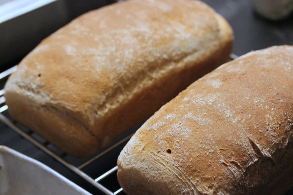 Whole Wheat Bread with Toasted Wheat Germ and Rye recipe