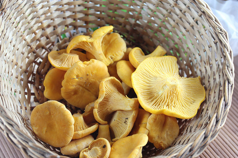 chanterelle mushrooms in a wicker basket picture